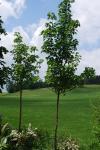 Landschaftsgärtner Kempten unternehmen grün gartengestaltung bäume und stäucher